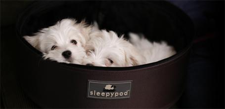 sleepypod.jpg