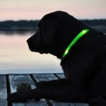 Glowdoggie: Finding Your Poodle In the Dark