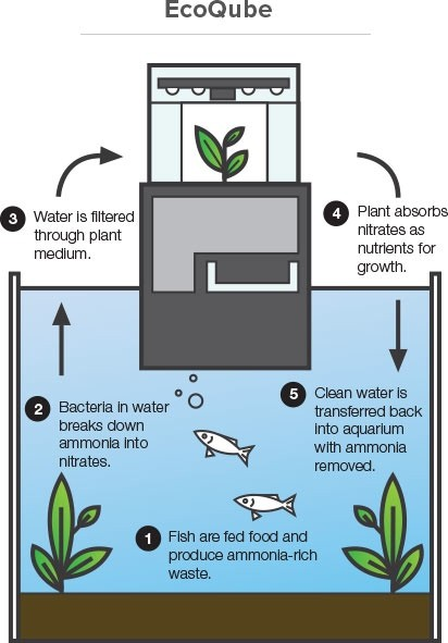 Self cleaning fish tank for How to clean a fish tank