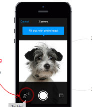 Finding Rover App with Facial Recognition for Dogs