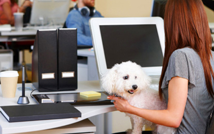 Why Having Dogs in the Office Can Improve Employee Morale