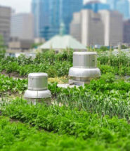 Restaurants Tie Up with Urban Farming