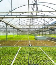 Integrated Agricultural City Cooperation