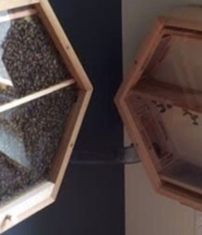 Rearing Bees At Home?